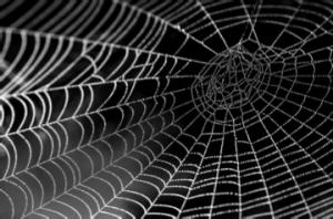 https://pixnio.com/nature-landscapes/water-dew-drops/spider-web-texture-dew