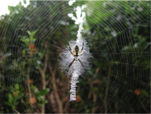 http://maxpixel.freegreatpicture.com/Web-Yellow-Garden-Spider-Macro-Insect-Outdoors-1982368