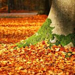 https://pixabay.com/en/fall-foliage-moss-tree-autumn-1913485/