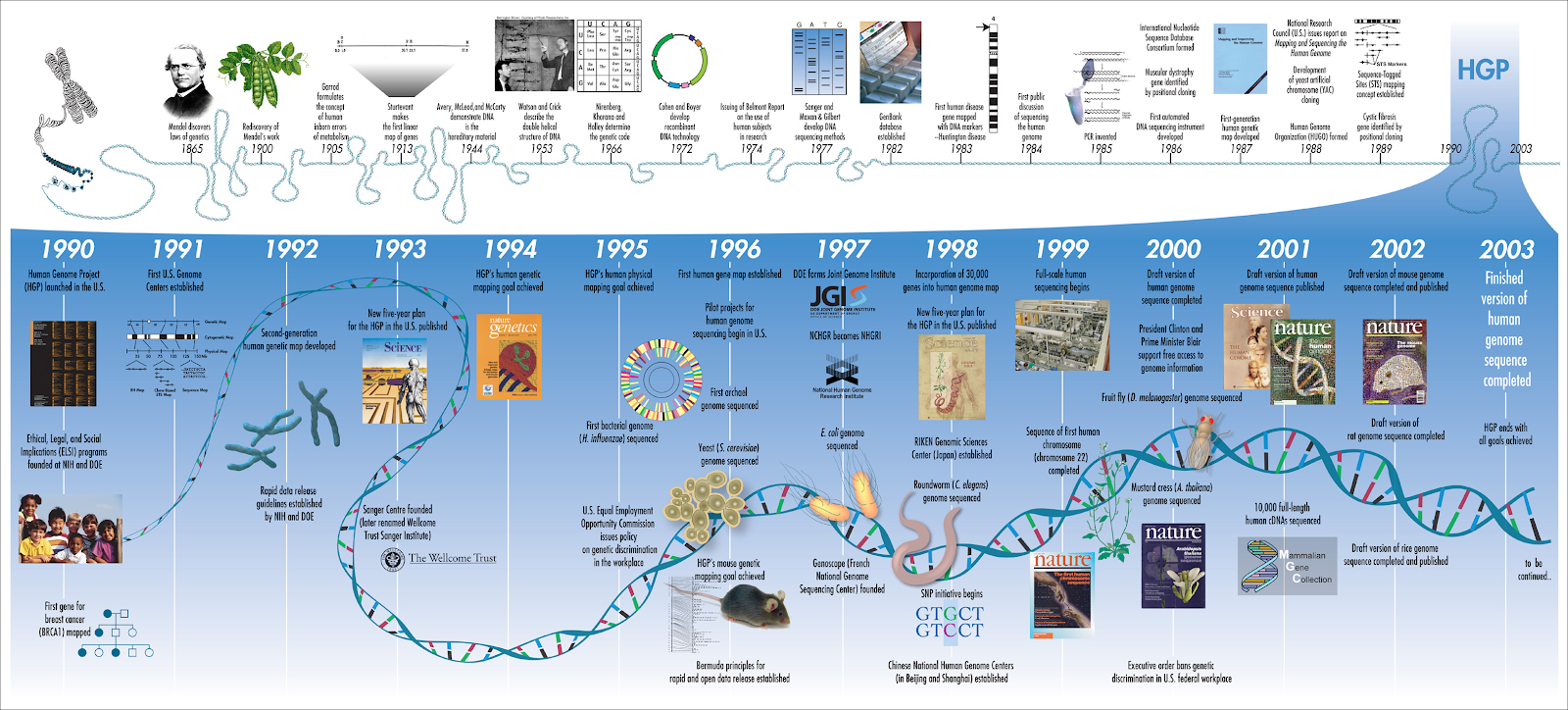 NC DNA Day » The Genome Project: More questions than ... Genetic Mapping In Disease on dna mapping, cognitive mapping, mental mapping, community mapping, thomas morgan's linkage mapping,